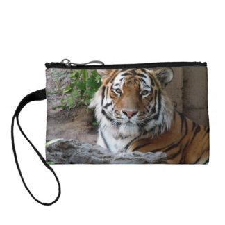 Tiger in Myanmar Change Purses