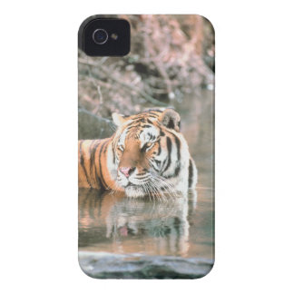 Tiger in stream iPhone 4 cover