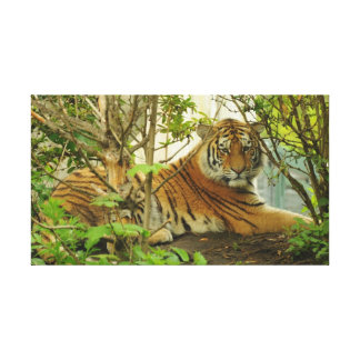 Tiger in The Forest Canvas Print