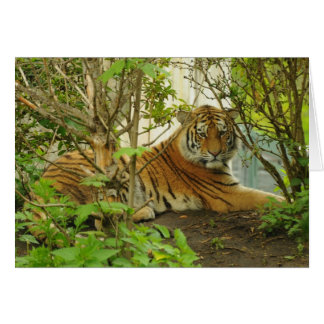 Tiger in The Forest Card