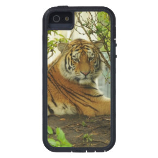 Tiger in The Forest Case For The iPhone 5