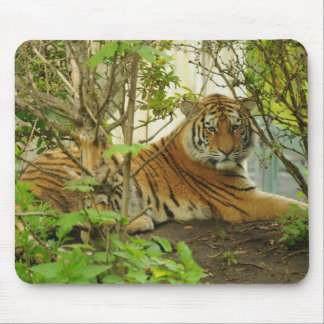 Tiger in The Forest Mouse Pad