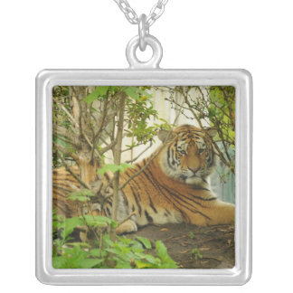 Tiger in The Forest Jewelry