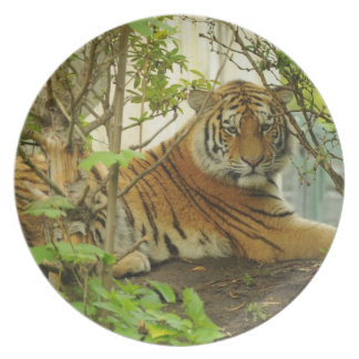 Tiger in The Forest Plate
