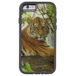 Tiger in The Forest Tough Xtreme iPhone 6 Case