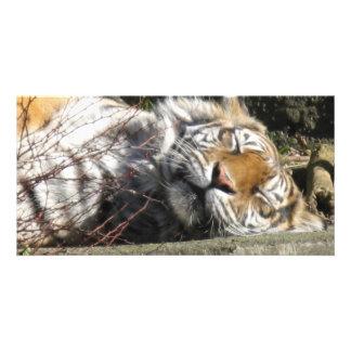 Tiger in the Sun Customized Photo Card