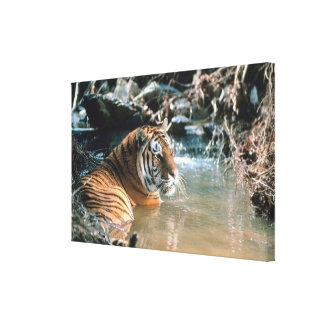 Tiger in water 2 canvas print