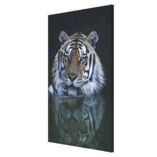 Tiger in Water Canvas Print