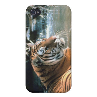 Tiger in water case for iPhone 4