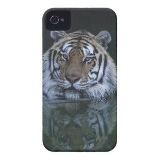 Tiger in Water Case-Mate iPhone 4 Cases
