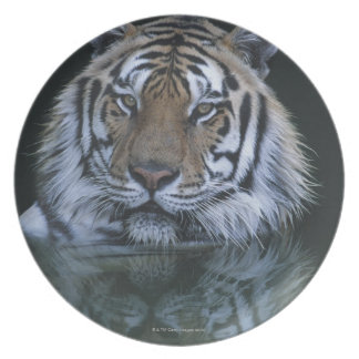 Tiger in Water Plate