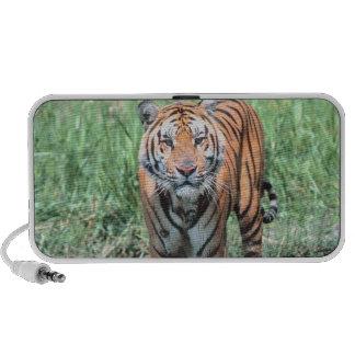 Tiger in water iPod speaker