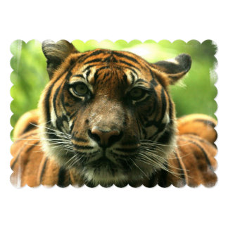 "Tiger 5"" X 7"" Invitation Card"