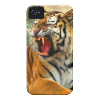 tiger iPhone 4 covers
