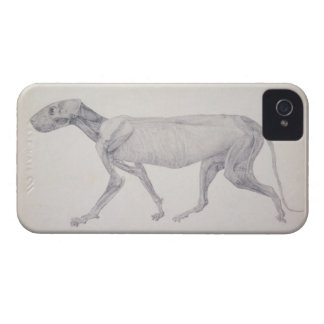 Tiger: Lateral View, Partially Dissected, from the iPhone 4 Case-Mate Case