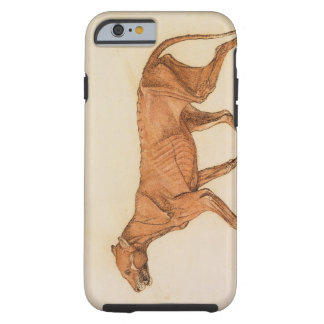 Tiger, Lateral View, Skin Removed, from 'A Compara Tough iPhone 6 Case