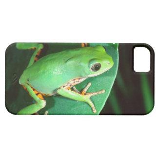 Tiger Leg Monkey Frog, Phyllomedusa iPhone 5 Case
