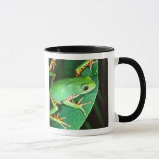 Tiger Leg Monkey Frog, Phyllomedusa Mug