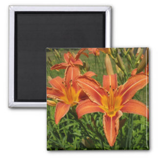 Tiger Lilies Magnet