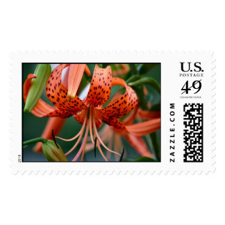 Tiger Lilies Postage Stamps