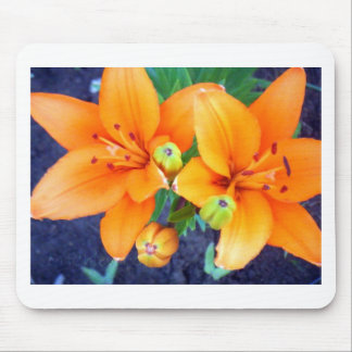 Tiger Lillies 3.jpg Mouse Pad
