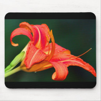 Tiger Lilly Mouse Pad