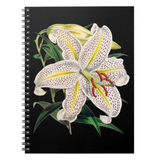 Tiger lily black notebook