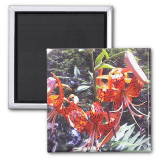 Tiger Lily Collection Magnet
