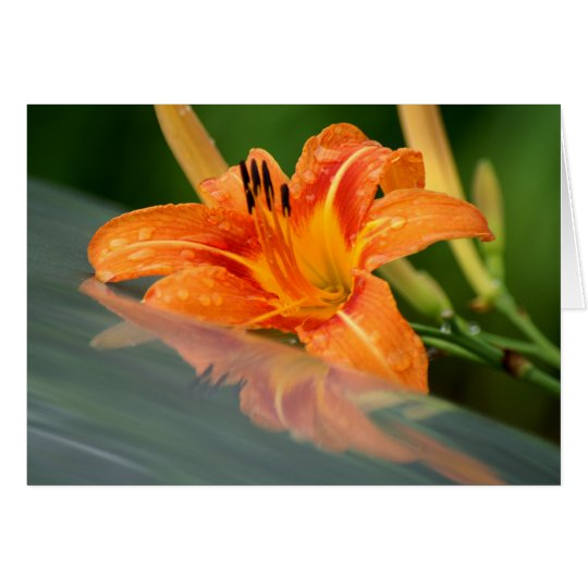 Tiger Lily Reflection Card