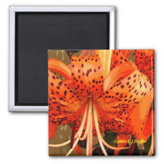 'Tiger Lily' Square Magnet