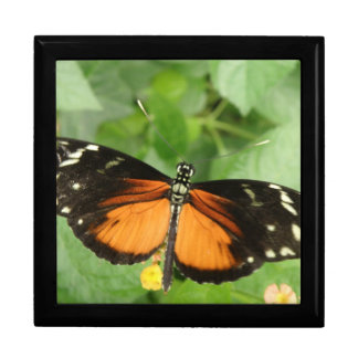 Tiger Longwing Butterfly Gift Box