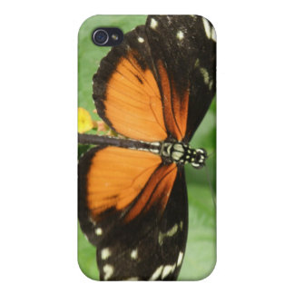 Tiger Longwing Butterfly i iPhone 4 Case