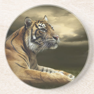 Tiger looking and sitting under dramatic sky beverage coaster