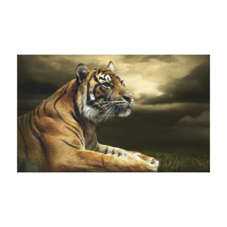 Tiger looking and sitting under dramatic sky canvas print