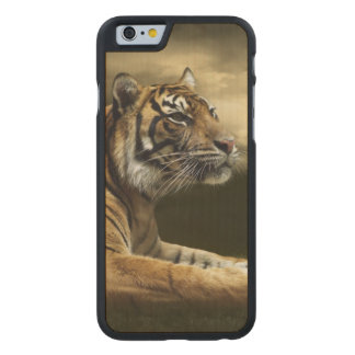 Tiger looking and sitting under dramatic sky carved maple iPhone 6 case