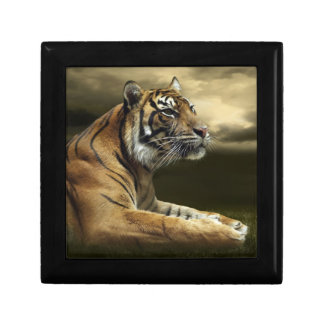 Tiger looking and sitting under dramatic sky gift box