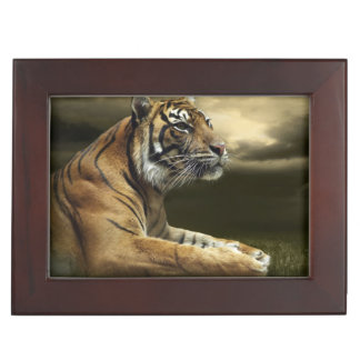 Tiger looking and sitting under dramatic sky memory boxes