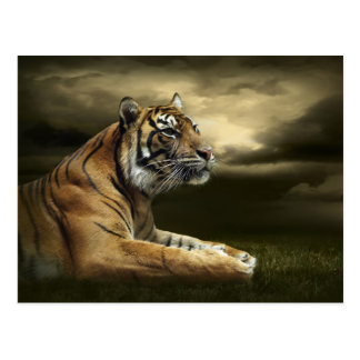 Tiger looking and sitting under dramatic sky postcard