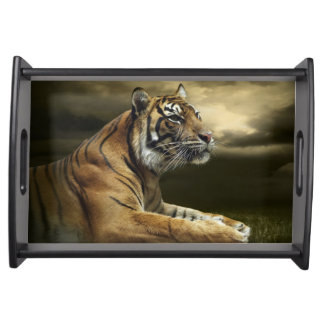 Tiger looking and sitting under dramatic sky serving tray