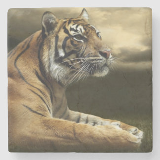 Tiger looking and sitting under dramatic sky stone coaster