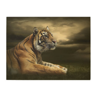 Tiger looking and sitting under dramatic sky wood wall art
