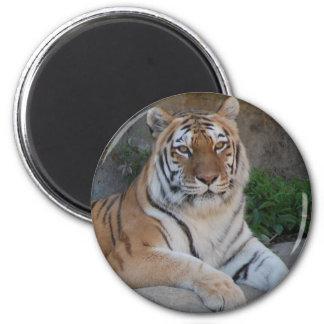 Tiger Love Magnet