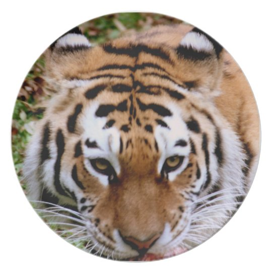 Tiger Markings  Plate