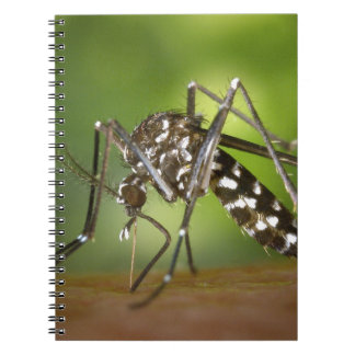 Tiger mosquito notebook
