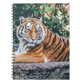 Tiger Notebooks
