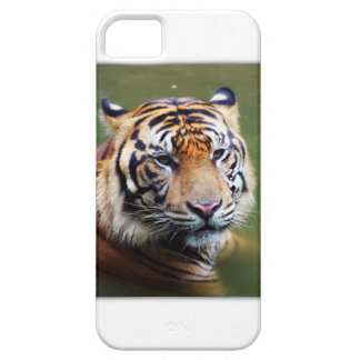 Tiger of Sumatra Barely There iPhone 5 Case