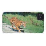 Tiger on path Case-Mate iPhone 4 cases