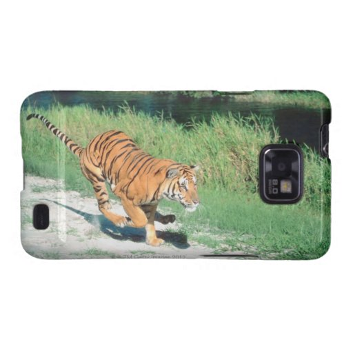 Tiger on path galaxy SII case