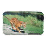 Tiger on path iPhone 3 cases
