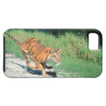 Tiger on path iPhone 5 case
